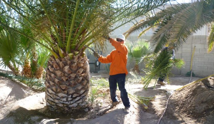 Palm tree service near me-Palm Beach County Tree Trimming and Tree Removal Services-We Offer Tree Trimming Services, Tree Removal, Tree Pruning, Tree Cutting, Residential and Commercial Tree Trimming Services, Storm Damage, Emergency Tree Removal, Land Clearing, Tree Companies, Tree Care Service, Stump Grinding, and we're the Best Tree Trimming Company Near You Guaranteed!