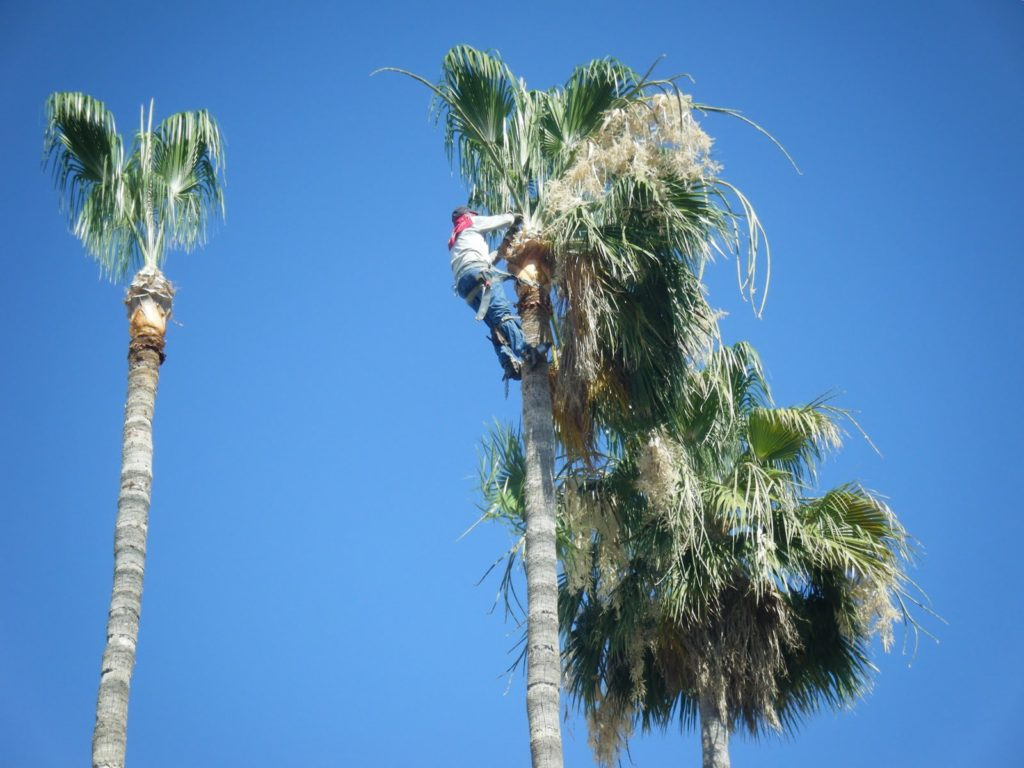 Palm tree trimming near me Palm Beach County-Palm Beach County Tree Trimming and Tree Removal Services-We Offer Tree Trimming Services, Tree Removal, Tree Pruning, Tree Cutting, Residential and Commercial Tree Trimming Services, Storm Damage, Emergency Tree Removal, Land Clearing, Tree Companies, Tree Care Service, Stump Grinding, and we're the Best Tree Trimming Company Near You Guaranteed!