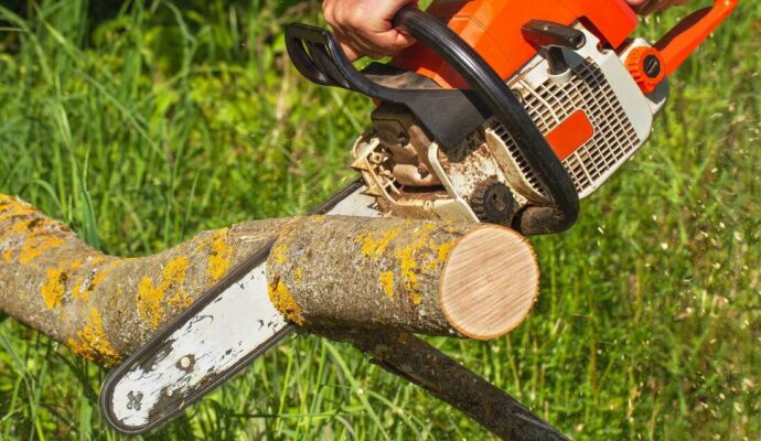 Service trees-Palm Beach County Tree Trimming and Tree Removal Services-We Offer Tree Trimming Services, Tree Removal, Tree Pruning, Tree Cutting, Residential and Commercial Tree Trimming Services, Storm Damage, Emergency Tree Removal, Land Clearing, Tree Companies, Tree Care Service, Stump Grinding, and we're the Best Tree Trimming Company Near You Guaranteed!