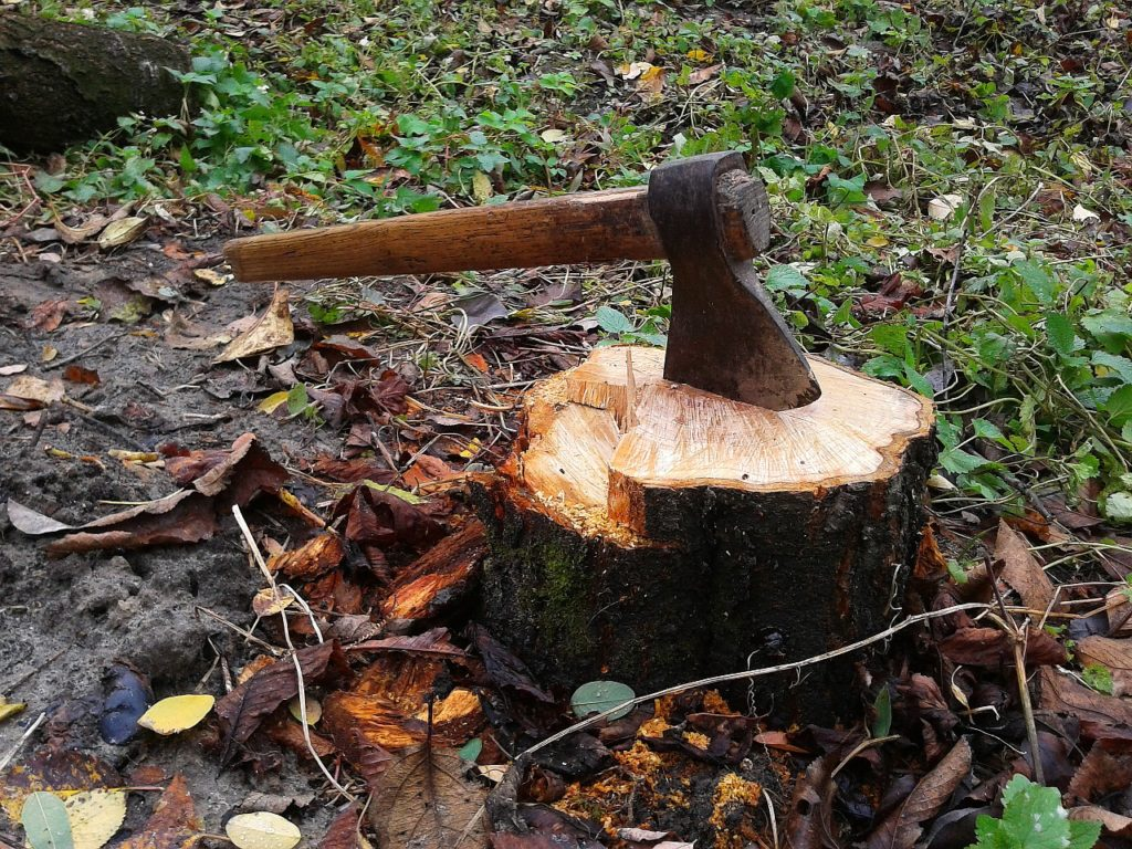 Stump removal how to-Palm Beach County Tree Trimming and Tree Removal Services-We Offer Tree Trimming Services, Tree Removal, Tree Pruning, Tree Cutting, Residential and Commercial Tree Trimming Services, Storm Damage, Emergency Tree Removal, Land Clearing, Tree Companies, Tree Care Service, Stump Grinding, and we're the Best Tree Trimming Company Near You Guaranteed!