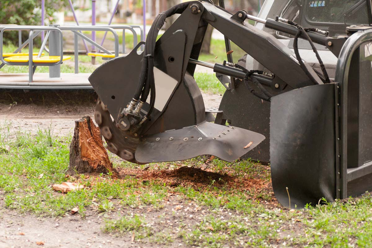 Stump removal prices-Palm Beach County Tree Trimming and Tree Removal Services-We Offer Tree Trimming Services, Tree Removal, Tree Pruning, Tree Cutting, Residential and Commercial Tree Trimming Services, Storm Damage, Emergency Tree Removal, Land Clearing, Tree Companies, Tree Care Service, Stump Grinding, and we're the Best Tree Trimming Company Near You Guaranteed!