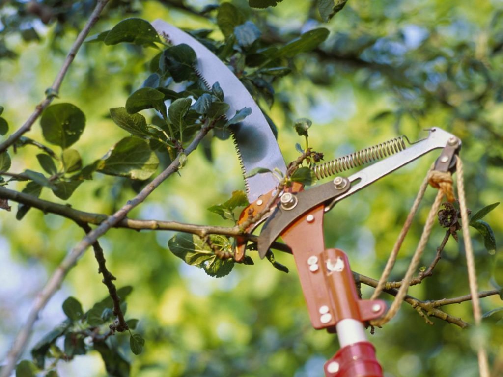 Tools for Tree Pruning-Palm Beach County Tree Trimming and Tree Removal Services-We Offer Tree Trimming Services, Tree Removal, Tree Pruning, Tree Cutting, Residential and Commercial Tree Trimming Services, Storm Damage, Emergency Tree Removal, Land Clearing, Tree Companies, Tree Care Service, Stump Grinding, and we're the Best Tree Trimming Company Near You Guaranteed!