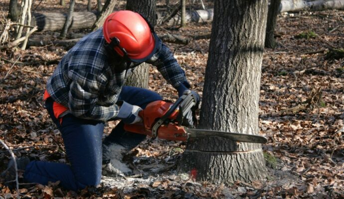 Tree Cutting Near Me-Palm Beach County Tree Trimming and Tree Removal Services-We Offer Tree Trimming Services, Tree Removal, Tree Pruning, Tree Cutting, Residential and Commercial Tree Trimming Services, Storm Damage, Emergency Tree Removal, Land Clearing, Tree Companies, Tree Care Service, Stump Grinding, and we're the Best Tree Trimming Company Near You Guaranteed!