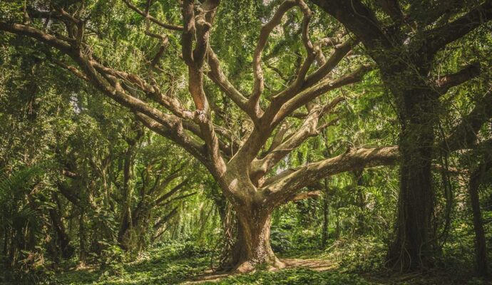 Tree Healthcare Near Me-Palm Beach County Tree Trimming and Tree Removal Services-We Offer Tree Trimming Services, Tree Removal, Tree Pruning, Tree Cutting, Residential and Commercial Tree Trimming Services, Storm Damage, Emergency Tree Removal, Land Clearing, Tree Companies, Tree Care Service, Stump Grinding, and we're the Best Tree Trimming Company Near You Guaranteed!