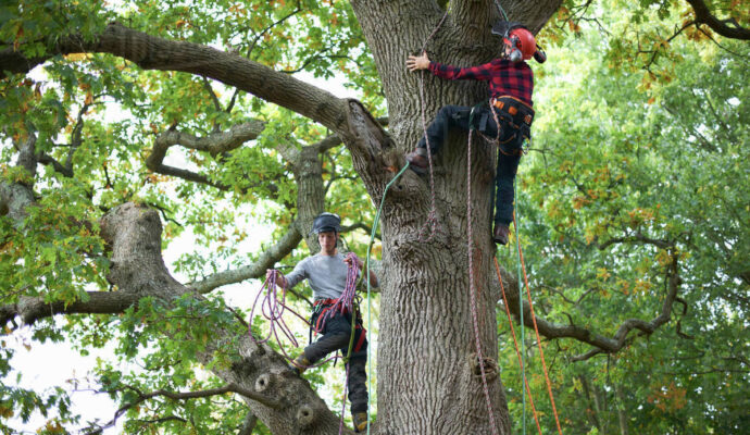 Tree Maintenance Company-Palm Beach County Tree Trimming and Tree Removal Services-We Offer Tree Trimming Services, Tree Removal, Tree Pruning, Tree Cutting, Residential and Commercial Tree Trimming Services, Storm Damage, Emergency Tree Removal, Land Clearing, Tree Companies, Tree Care Service, Stump Grinding, and we're the Best Tree Trimming Company Near You Guaranteed!
