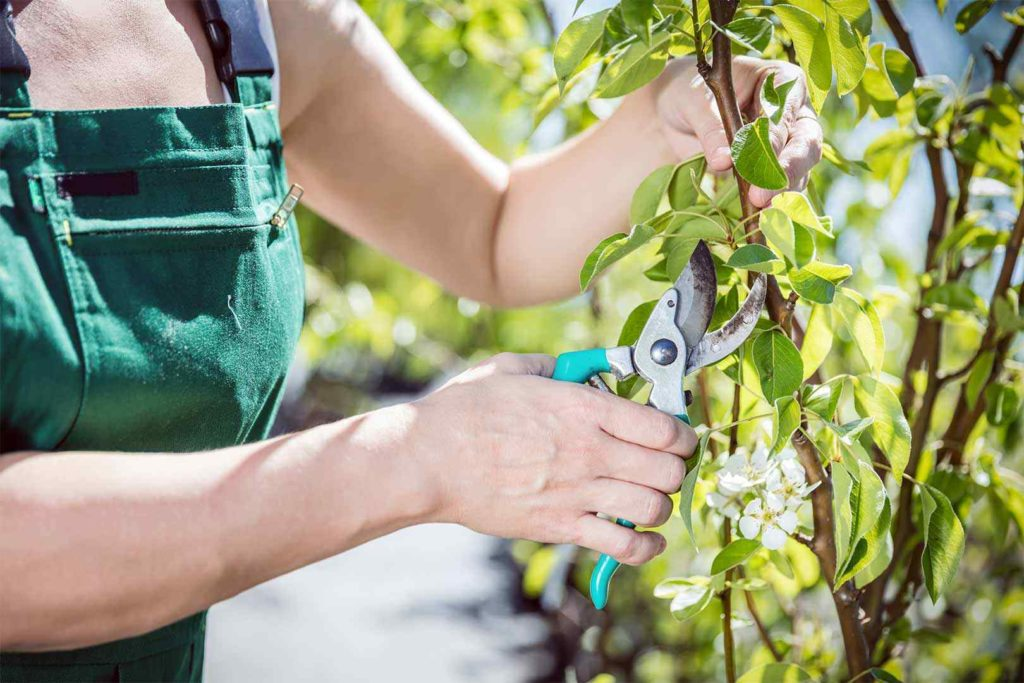 Tree Pruning Near Me-Palm Beach County Tree Trimming and Tree Removal Services-We Offer Tree Trimming Services, Tree Removal, Tree Pruning, Tree Cutting, Residential and Commercial Tree Trimming Services, Storm Damage, Emergency Tree Removal, Land Clearing, Tree Companies, Tree Care Service, Stump Grinding, and we're the Best Tree Trimming Company Near You Guaranteed!