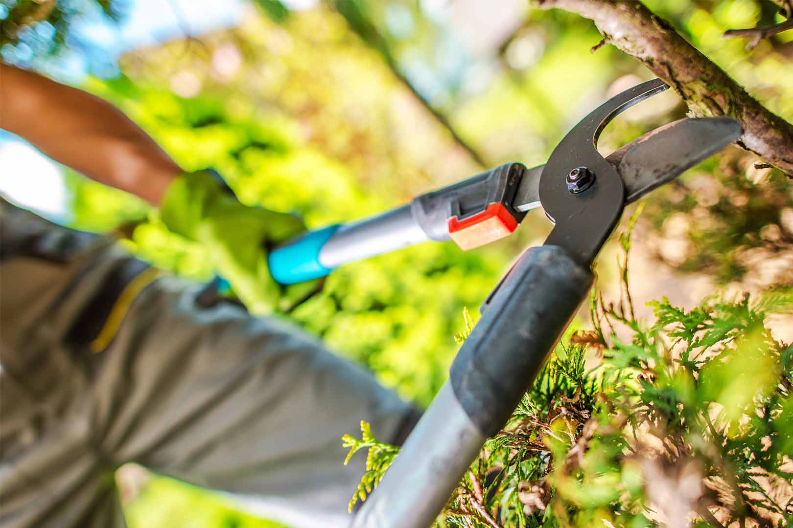 Tree Pruning companies-Palm Beach County Tree Trimming and Tree Removal Services-We Offer Tree Trimming Services, Tree Removal, Tree Pruning, Tree Cutting, Residential and Commercial Tree Trimming Services, Storm Damage, Emergency Tree Removal, Land Clearing, Tree Companies, Tree Care Service, Stump Grinding, and we're the Best Tree Trimming Company Near You Guaranteed!