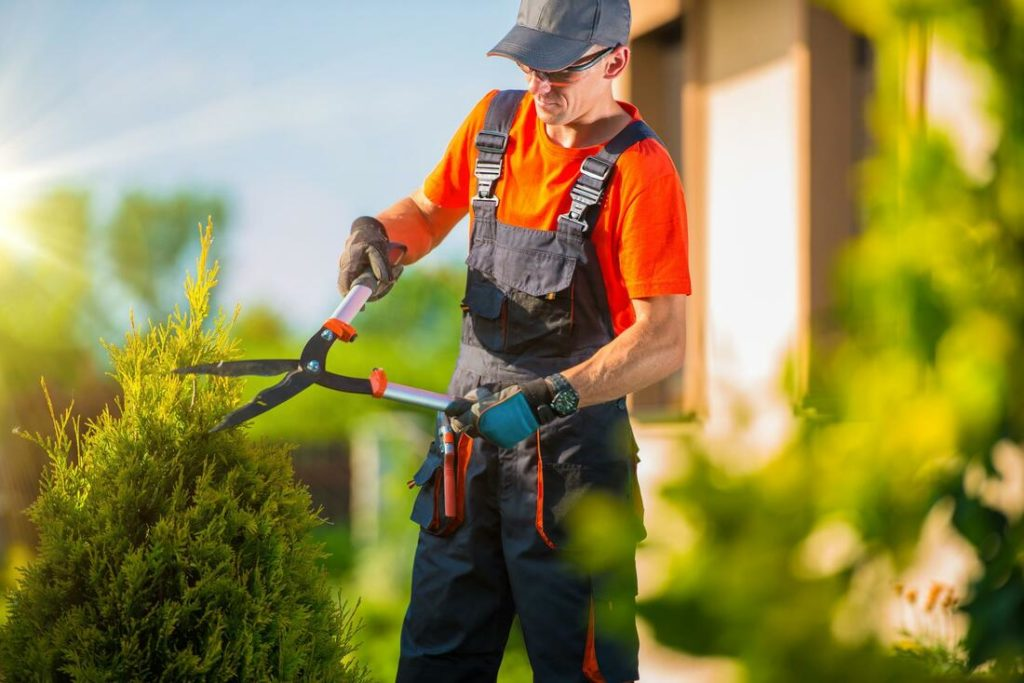 Tree Pruning cost-Palm Beach County Tree Trimming and Tree Removal Services-We Offer Tree Trimming Services, Tree Removal, Tree Pruning, Tree Cutting, Residential and Commercial Tree Trimming Services, Storm Damage, Emergency Tree Removal, Land Clearing, Tree Companies, Tree Care Service, Stump Grinding, and we're the Best Tree Trimming Company Near You Guaranteed!