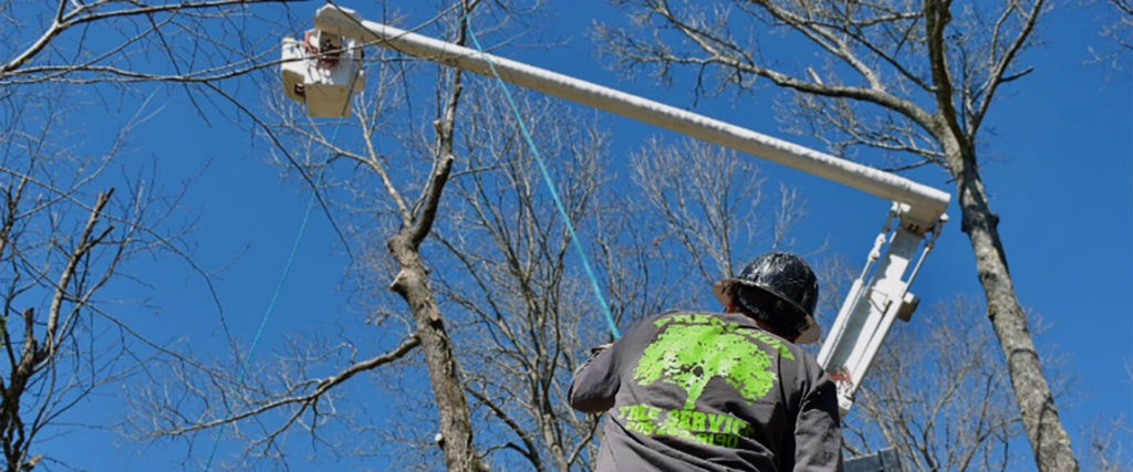 Tree Pruning service-Palm Beach County Tree Trimming and Tree Removal Services-We Offer Tree Trimming Services, Tree Removal, Tree Pruning, Tree Cutting, Residential and Commercial Tree Trimming Services, Storm Damage, Emergency Tree Removal, Land Clearing, Tree Companies, Tree Care Service, Stump Grinding, and we're the Best Tree Trimming Company Near You Guaranteed!