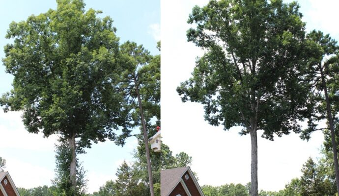 Tree Trimming Before and After-Palm Beach County Tree Trimming and Tree Removal Services-We Offer Tree Trimming Services, Tree Removal, Tree Pruning, Tree Cutting, Residential and Commercial Tree Trimming Services, Storm Damage, Emergency Tree Removal, Land Clearing, Tree Companies, Tree Care Service, Stump Grinding, and we're the Best Tree Trimming Company Near You Guaranteed!