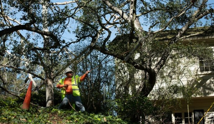 Tree Trimming Contractors-Palm Beach County Tree Trimming and Tree Removal Services-We Offer Tree Trimming Services, Tree Removal, Tree Pruning, Tree Cutting, Residential and Commercial Tree Trimming Services, Storm Damage, Emergency Tree Removal, Land Clearing, Tree Companies, Tree Care Service, Stump Grinding, and we're the Best Tree Trimming Company Near You Guaranteed!
