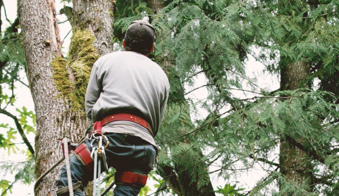 Tree Trimming Experts-Palm Beach County Tree Trimming and Tree Removal Services-We Offer Tree Trimming Services, Tree Removal, Tree Pruning, Tree Cutting, Residential and Commercial Tree Trimming Services, Storm Damage, Emergency Tree Removal, Land Clearing, Tree Companies, Tree Care Service, Stump Grinding, and we're the Best Tree Trimming Company Near You Guaranteed!