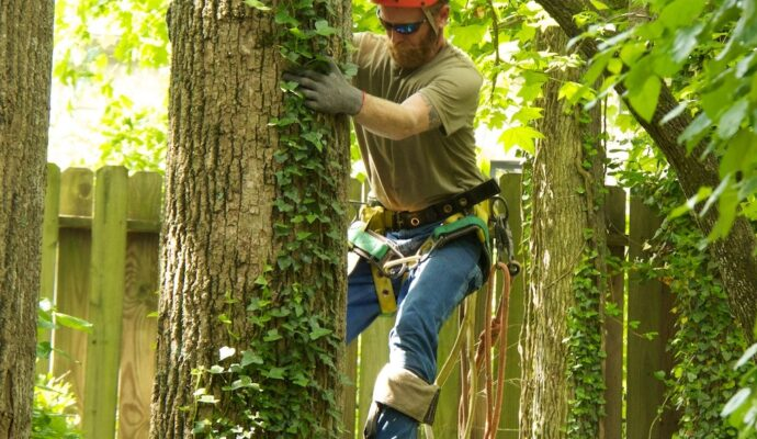 Tree Trimming Harness-Palm Beach County Tree Trimming and Tree Removal Services-We Offer Tree Trimming Services, Tree Removal, Tree Pruning, Tree Cutting, Residential and Commercial Tree Trimming Services, Storm Damage, Emergency Tree Removal, Land Clearing, Tree Companies, Tree Care Service, Stump Grinding, and we're the Best Tree Trimming Company Near You Guaranteed!
