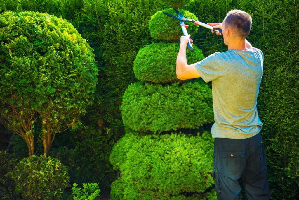 Tree Trimming Landscaping-Palm Beach County Tree Trimming and Tree Removal Services-We Offer Tree Trimming Services, Tree Removal, Tree Pruning, Tree Cutting, Residential and Commercial Tree Trimming Services, Storm Damage, Emergency Tree Removal, Land Clearing, Tree Companies, Tree Care Service, Stump Grinding, and we're the Best Tree Trimming Company Near You Guaranteed!