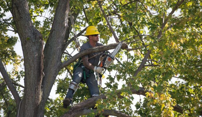 Tree Trimming Near Me Palm Beach-Palm Beach County Tree Trimming and Tree Removal Services-We Offer Tree Trimming Services, Tree Removal, Tree Pruning, Tree Cutting, Residential and Commercial Tree Trimming Services, Storm Damage, Emergency Tree Removal, Land Clearing, Tree Companies, Tree Care Service, Stump Grinding, and we're the Best Tree Trimming Company Near You Guaranteed!