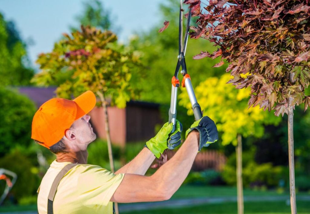 Tree Trimming Near Me Palm Beach County-Palm Beach County Tree Trimming and Tree Removal Services-We Offer Tree Trimming Services, Tree Removal, Tree Pruning, Tree Cutting, Residential and Commercial Tree Trimming Services, Storm Damage, Emergency Tree Removal, Land Clearing, Tree Companies, Tree Care Service, Stump Grinding, and we're the Best Tree Trimming Company Near You Guaranteed!