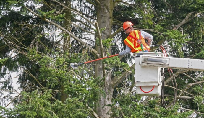 Tree Trimming Near Power Lines-Palm Beach County Tree Trimming and Tree Removal Services-We Offer Tree Trimming Services, Tree Removal, Tree Pruning, Tree Cutting, Residential and Commercial Tree Trimming Services, Storm Damage, Emergency Tree Removal, Land Clearing, Tree Companies, Tree Care Service, Stump Grinding, and we're the Best Tree Trimming Company Near You Guaranteed!