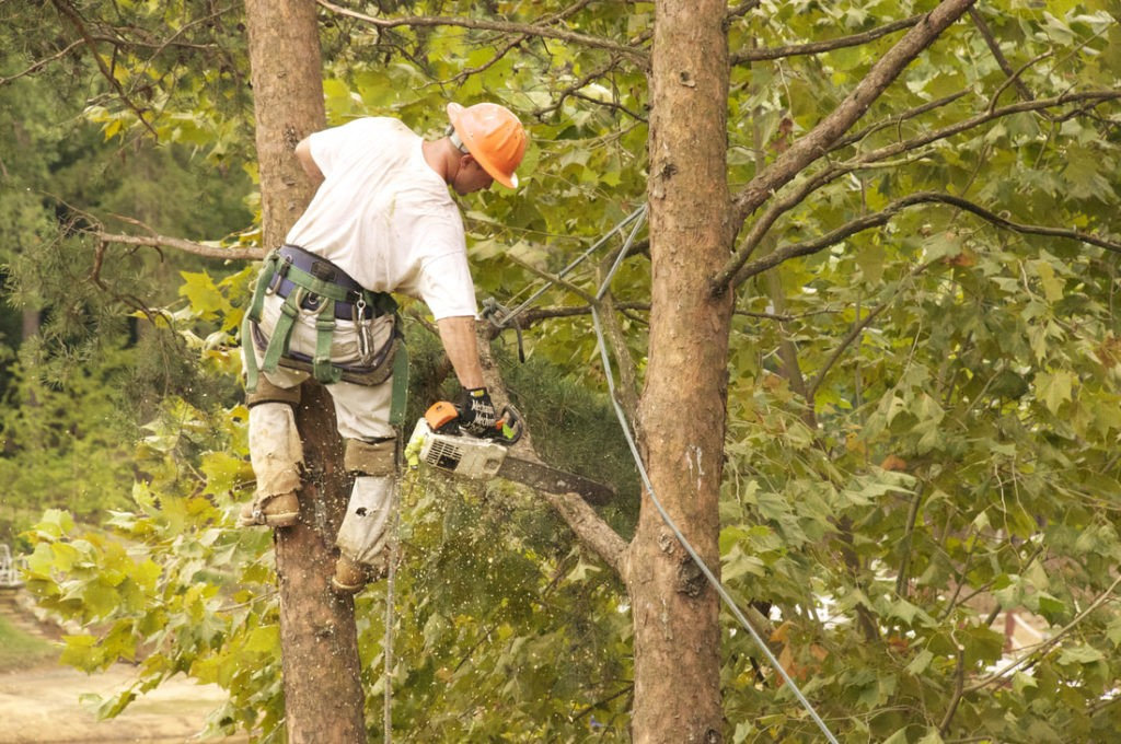 Tree Trimming Removal Service-Palm Beach County Tree Trimming and Tree Removal Services-We Offer Tree Trimming Services, Tree Removal, Tree Pruning, Tree Cutting, Residential and Commercial Tree Trimming Services, Storm Damage, Emergency Tree Removal, Land Clearing, Tree Companies, Tree Care Service, Stump Grinding, and we're the Best Tree Trimming Company Near You Guaranteed!