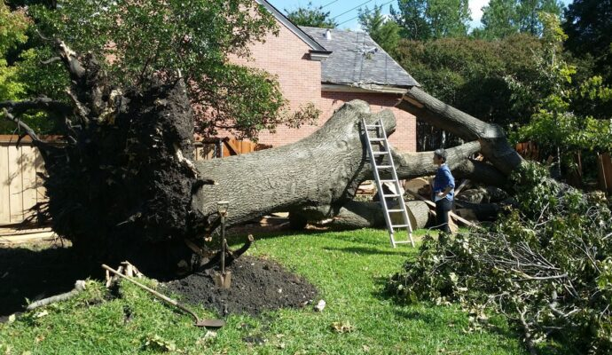 Tree Trimming Service Near Me-Palm Beach County Tree Trimming and Tree Removal Services-We Offer Tree Trimming Services, Tree Removal, Tree Pruning, Tree Cutting, Residential and Commercial Tree Trimming Services, Storm Damage, Emergency Tree Removal, Land Clearing, Tree Companies, Tree Care Service, Stump Grinding, and we're the Best Tree Trimming Company Near You Guaranteed!