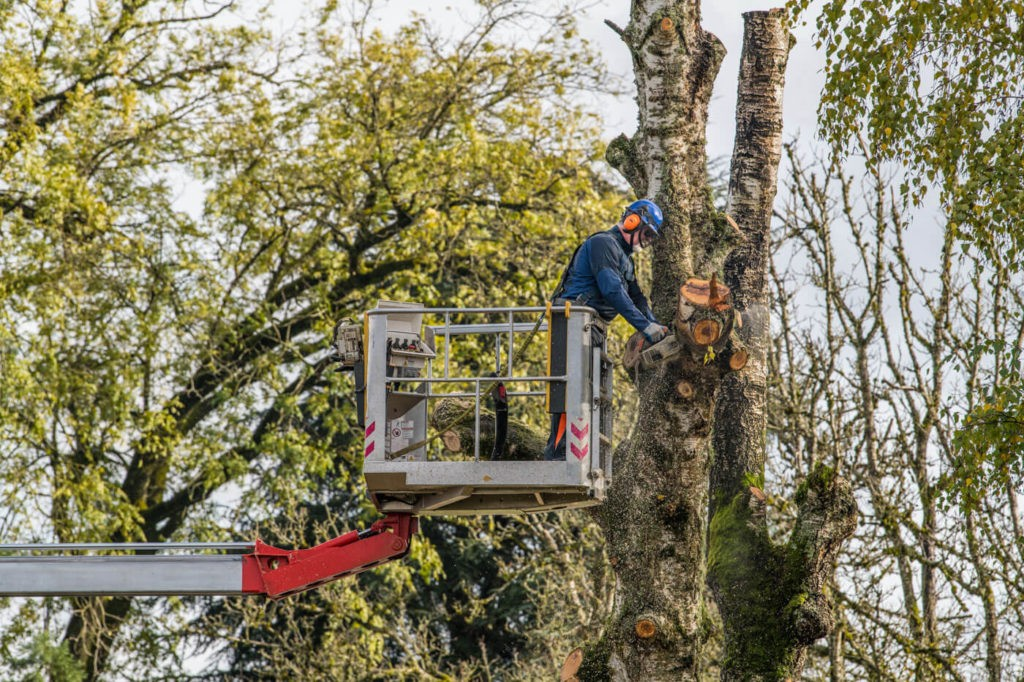 Tree Trimming Services-Palm Beach County Tree Trimming and Tree Removal Services-We Offer Tree Trimming Services, Tree Removal, Tree Pruning, Tree Cutting, Residential and Commercial Tree Trimming Services, Storm Damage, Emergency Tree Removal, Land Clearing, Tree Companies, Tree Care Service, Stump Grinding, and we're the Best Tree Trimming Company Near You Guaranteed!