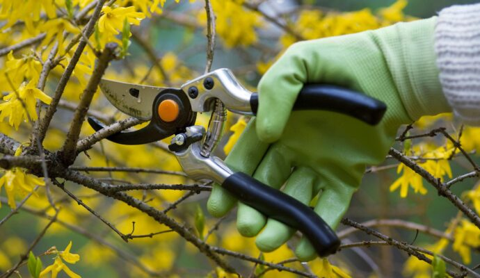 Tree Trimming Tips-Palm Beach County Tree Trimming and Tree Removal Services-We Offer Tree Trimming Services, Tree Removal, Tree Pruning, Tree Cutting, Residential and Commercial Tree Trimming Services, Storm Damage, Emergency Tree Removal, Land Clearing, Tree Companies, Tree Care Service, Stump Grinding, and we're the Best Tree Trimming Company Near You Guaranteed!