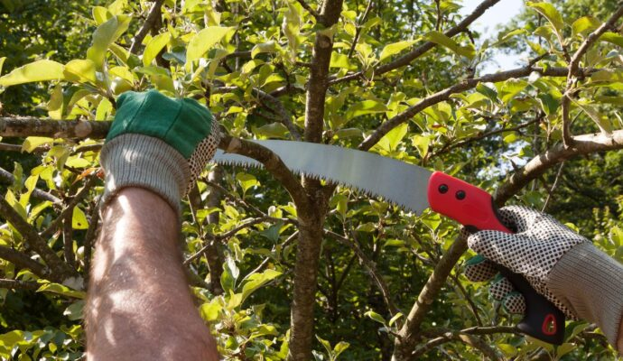 Tree Trimming Tools-Palm Beach County Tree Trimming and Tree Removal Services-We Offer Tree Trimming Services, Tree Removal, Tree Pruning, Tree Cutting, Residential and Commercial Tree Trimming Services, Storm Damage, Emergency Tree Removal, Land Clearing, Tree Companies, Tree Care Service, Stump Grinding, and we're the Best Tree Trimming Company Near You Guaranteed!