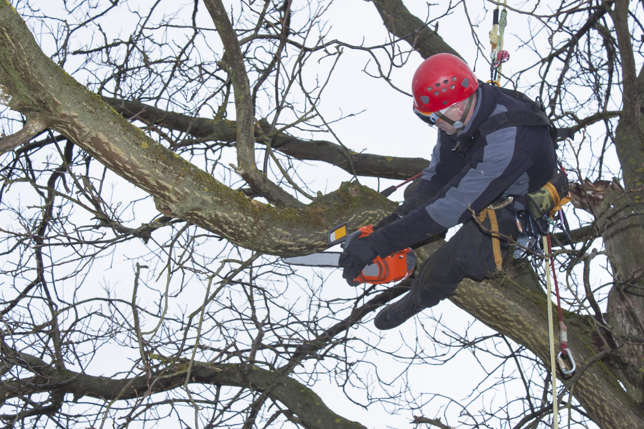 Tree Trimming and Pruning-Palm Beach County Tree Trimming and Tree Removal Services-We Offer Tree Trimming Services, Tree Removal, Tree Pruning, Tree Cutting, Residential and Commercial Tree Trimming Services, Storm Damage, Emergency Tree Removal, Land Clearing, Tree Companies, Tree Care Service, Stump Grinding, and we're the Best Tree Trimming Company Near You Guaranteed!