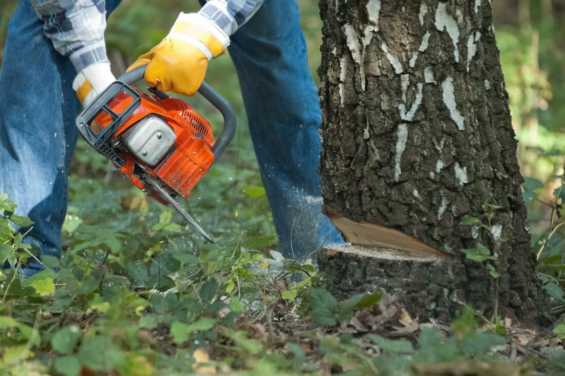 Tree Trimming and Removal Cost-Palm Beach County Tree Trimming and Tree Removal Services-We Offer Tree Trimming Services, Tree Removal, Tree Pruning, Tree Cutting, Residential and Commercial Tree Trimming Services, Storm Damage, Emergency Tree Removal, Land Clearing, Tree Companies, Tree Care Service, Stump Grinding, and we're the Best Tree Trimming Company Near You Guaranteed!