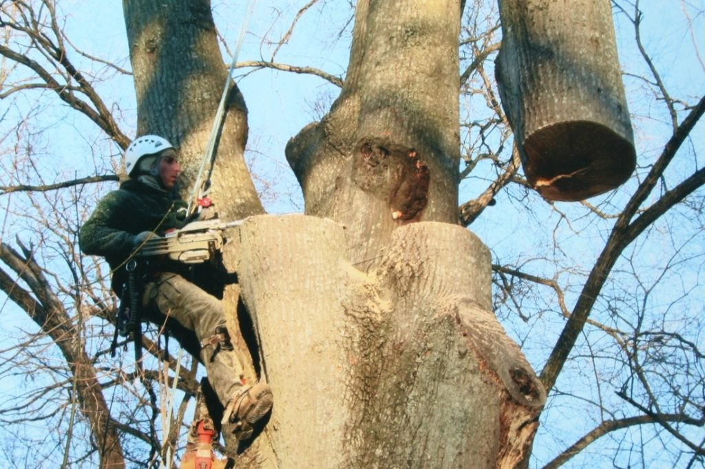 Tree arborist prices-Palm Beach County Tree Trimming and Tree Removal Services-We Offer Tree Trimming Services, Tree Removal, Tree Pruning, Tree Cutting, Residential and Commercial Tree Trimming Services, Storm Damage, Emergency Tree Removal, Land Clearing, Tree Companies, Tree Care Service, Stump Grinding, and we're the Best Tree Trimming Company Near You Guaranteed!