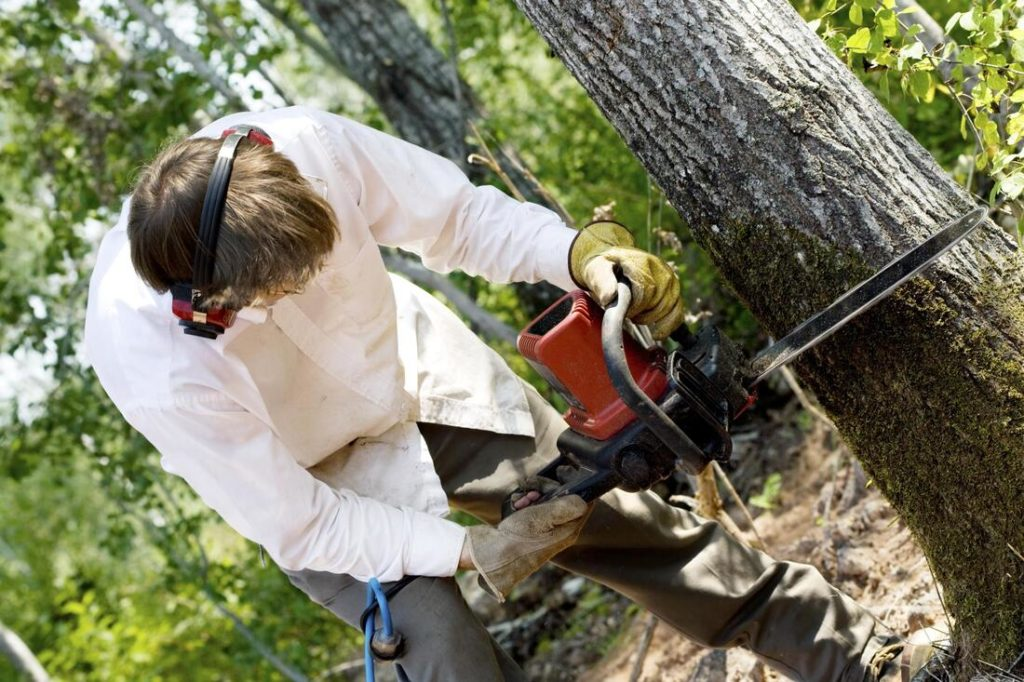 Tree cutters in my area-Palm Beach County Tree Trimming and Tree Removal Services-We Offer Tree Trimming Services, Tree Removal, Tree Pruning, Tree Cutting, Residential and Commercial Tree Trimming Services, Storm Damage, Emergency Tree Removal, Land Clearing, Tree Companies, Tree Care Service, Stump Grinding, and we're the Best Tree Trimming Company Near You Guaranteed!