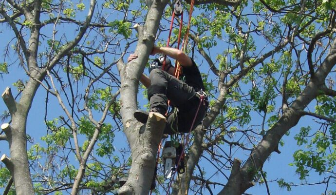 Tree pruning company-Palm Beach County Tree Trimming and Tree Removal Services-We Offer Tree Trimming Services, Tree Removal, Tree Pruning, Tree Cutting, Residential and Commercial Tree Trimming Services, Storm Damage, Emergency Tree Removal, Land Clearing, Tree Companies, Tree Care Service, Stump Grinding, and we're the Best Tree Trimming Company Near You Guaranteed!