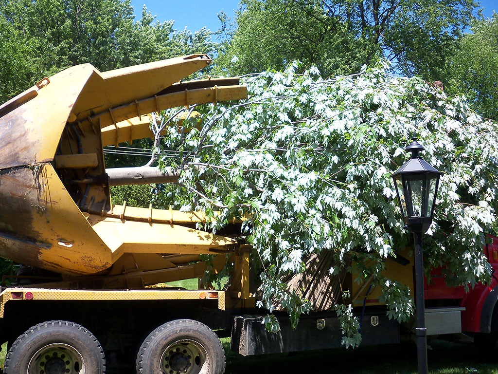 Tree relocation service-Palm Beach County Tree Trimming and Tree Removal Services-We Offer Tree Trimming Services, Tree Removal, Tree Pruning, Tree Cutting, Residential and Commercial Tree Trimming Services, Storm Damage, Emergency Tree Removal, Land Clearing, Tree Companies, Tree Care Service, Stump Grinding, and we're the Best Tree Trimming Company Near You Guaranteed!