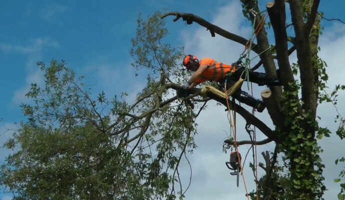 Tree removal arborist-Palm Beach County Tree Trimming and Tree Removal Services-We Offer Tree Trimming Services, Tree Removal, Tree Pruning, Tree Cutting, Residential and Commercial Tree Trimming Services, Storm Damage, Emergency Tree Removal, Land Clearing, Tree Companies, Tree Care Service, Stump Grinding, and we're the Best Tree Trimming Company Near You Guaranteed!
