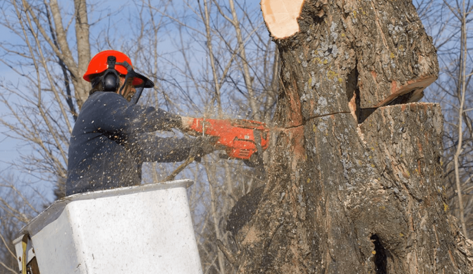 Tree removal companies-Palm Beach County Tree Trimming and Tree Removal Services-We Offer Tree Trimming Services, Tree Removal, Tree Pruning, Tree Cutting, Residential and Commercial Tree Trimming Services, Storm Damage, Emergency Tree Removal, Land Clearing, Tree Companies, Tree Care Service, Stump Grinding, and we're the Best Tree Trimming Company Near You Guaranteed!