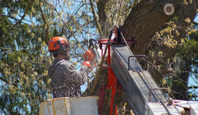 Tree removal cost estimate-Palm Beach County Tree Trimming and Tree Removal Services-We Offer Tree Trimming Services, Tree Removal, Tree Pruning, Tree Cutting, Residential and Commercial Tree Trimming Services, Storm Damage, Emergency Tree Removal, Land Clearing, Tree Companies, Tree Care Service, Stump Grinding, and we're the Best Tree Trimming Company Near You Guaranteed!