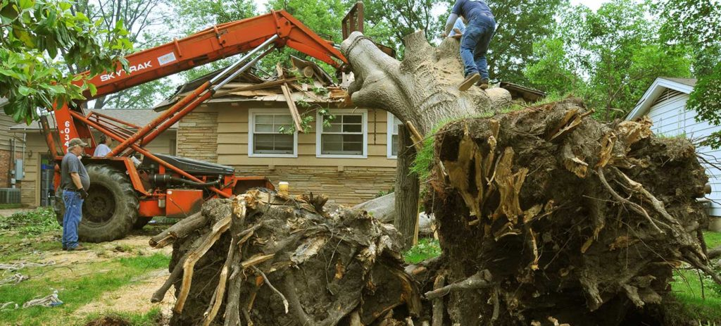 Tree removal cost per tree-Palm Beach County Tree Trimming and Tree Removal Services-We Offer Tree Trimming Services, Tree Removal, Tree Pruning, Tree Cutting, Residential and Commercial Tree Trimming Services, Storm Damage, Emergency Tree Removal, Land Clearing, Tree Companies, Tree Care Service, Stump Grinding, and we're the Best Tree Trimming Company Near You Guaranteed!