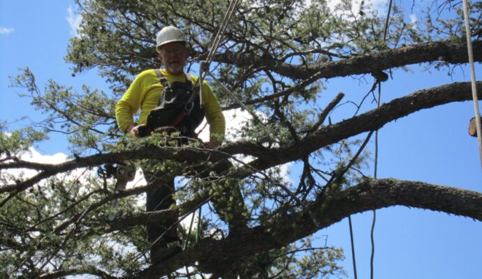 Tree removal service cost-Palm Beach County Tree Trimming and Tree Removal Services-We Offer Tree Trimming Services, Tree Removal, Tree Pruning, Tree Cutting, Residential and Commercial Tree Trimming Services, Storm Damage, Emergency Tree Removal, Land Clearing, Tree Companies, Tree Care Service, Stump Grinding, and we're the Best Tree Trimming Company Near You Guaranteed!