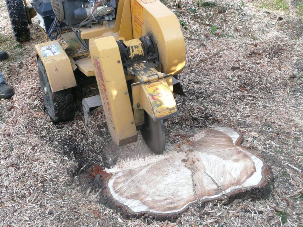 Tree root removal services-Palm Beach County Tree Trimming and Tree Removal Services-We Offer Tree Trimming Services, Tree Removal, Tree Pruning, Tree Cutting, Residential and Commercial Tree Trimming Services, Storm Damage, Emergency Tree Removal, Land Clearing, Tree Companies, Tree Care Service, Stump Grinding, and we're the Best Tree Trimming Company Near You Guaranteed!