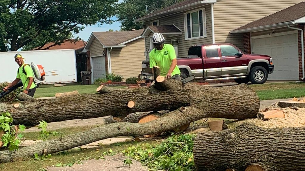 Tree service businesses-Palm Beach County Tree Trimming and Tree Removal Services-We Offer Tree Trimming Services, Tree Removal, Tree Pruning, Tree Cutting, Residential and Commercial Tree Trimming Services, Storm Damage, Emergency Tree Removal, Land Clearing, Tree Companies, Tree Care Service, Stump Grinding, and we're the Best Tree Trimming Company Near You Guaranteed!