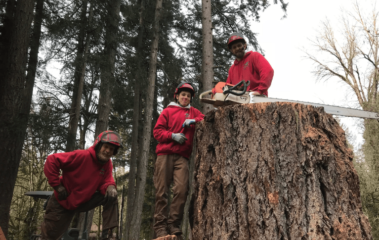 Tree service estimator-Palm Beach County Tree Trimming and Tree Removal Services-We Offer Tree Trimming Services, Tree Removal, Tree Pruning, Tree Cutting, Residential and Commercial Tree Trimming Services, Storm Damage, Emergency Tree Removal, Land Clearing, Tree Companies, Tree Care Service, Stump Grinding, and we're the Best Tree Trimming Company Near You Guaranteed!