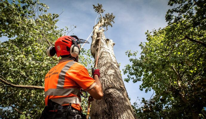 Tree surgeons-Palm Beach County Tree Trimming and Tree Removal Services-We Offer Tree Trimming Services, Tree Removal, Tree Pruning, Tree Cutting, Residential and Commercial Tree Trimming Services, Storm Damage, Emergency Tree Removal, Land Clearing, Tree Companies, Tree Care Service, Stump Grinding, and we're the Best Tree Trimming Company Near You Guaranteed!