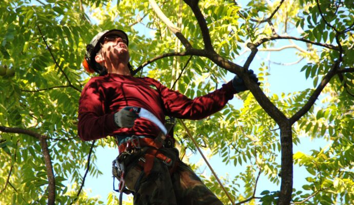 Tree treatment companies-Palm Beach County Tree Trimming and Tree Removal Services-We Offer Tree Trimming Services, Tree Removal, Tree Pruning, Tree Cutting, Residential and Commercial Tree Trimming Services, Storm Damage, Emergency Tree Removal, Land Clearing, Tree Companies, Tree Care Service, Stump Grinding, and we're the Best Tree Trimming Company Near You Guaranteed!
