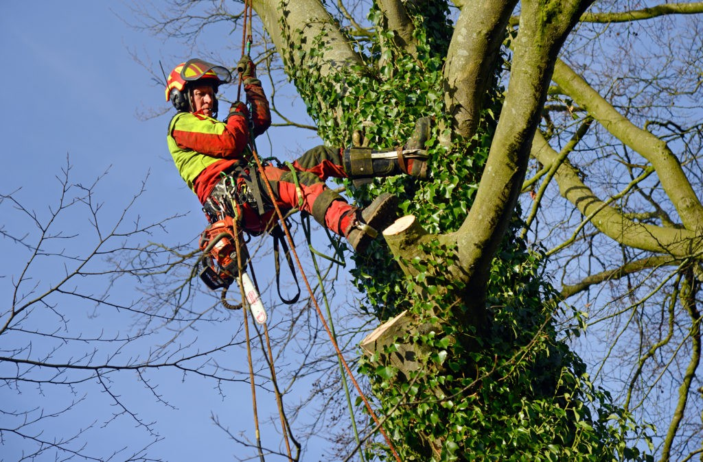 Tree trimmers near me-Palm Beach County Tree Trimming and Tree Removal Services-We Offer Tree Trimming Services, Tree Removal, Tree Pruning, Tree Cutting, Residential and Commercial Tree Trimming Services, Storm Damage, Emergency Tree Removal, Land Clearing, Tree Companies, Tree Care Service, Stump Grinding, and we're the Best Tree Trimming Company Near You Guaranteed!