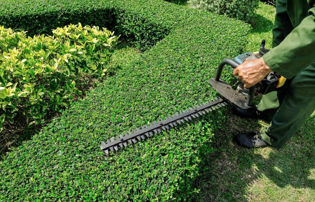Tree trimming and landscaping near me-Palm Beach County Tree Trimming and Tree Removal Services-We Offer Tree Trimming Services, Tree Removal, Tree Pruning, Tree Cutting, Residential and Commercial Tree Trimming Services, Storm Damage, Emergency Tree Removal, Land Clearing, Tree Companies, Tree Care Service, Stump Grinding, and we're the Best Tree Trimming Company Near You Guaranteed!