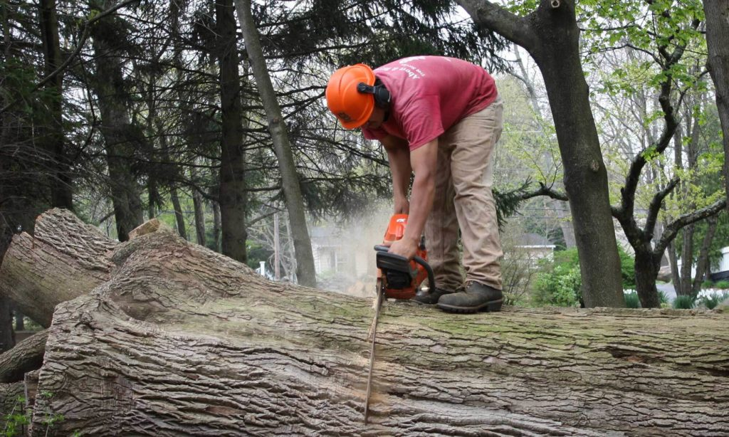 Tree trimming and removal near me-Palm Beach County Tree Trimming and Tree Removal Services-We Offer Tree Trimming Services, Tree Removal, Tree Pruning, Tree Cutting, Residential and Commercial Tree Trimming Services, Storm Damage, Emergency Tree Removal, Land Clearing, Tree Companies, Tree Care Service, Stump Grinding, and we're the Best Tree Trimming Company Near You Guaranteed!