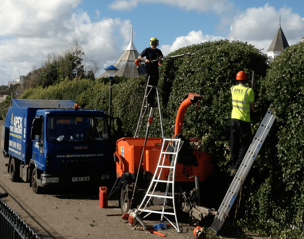 Tree trimming companies near me-Palm Beach County Tree Trimming and Tree Removal Services-We Offer Tree Trimming Services, Tree Removal, Tree Pruning, Tree Cutting, Residential and Commercial Tree Trimming Services, Storm Damage, Emergency Tree Removal, Land Clearing, Tree Companies, Tree Care Service, Stump Grinding, and we're the Best Tree Trimming Company Near You Guaranteed!