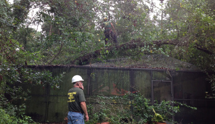 Tree trimming company-Palm Beach County Tree Trimming and Tree Removal Services-We Offer Tree Trimming Services, Tree Removal, Tree Pruning, Tree Cutting, Residential and Commercial Tree Trimming Services, Storm Damage, Emergency Tree Removal, Land Clearing, Tree Companies, Tree Care Service, Stump Grinding, and we're the Best Tree Trimming Company Near You Guaranteed!