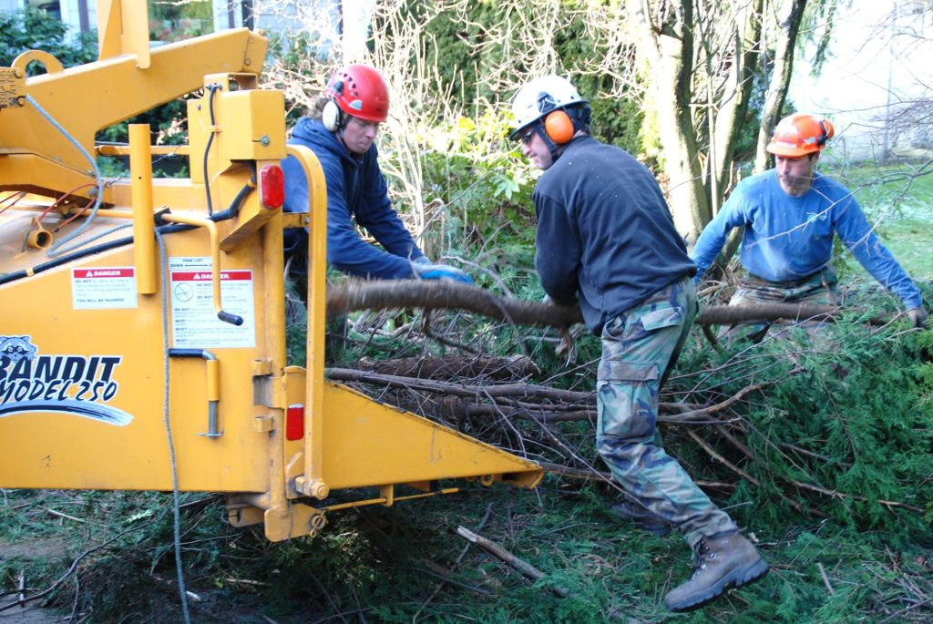 Tree trimming services in my area-Palm Beach County Tree Trimming and Tree Removal Services-We Offer Tree Trimming Services, Tree Removal, Tree Pruning, Tree Cutting, Residential and Commercial Tree Trimming Services, Storm Damage, Emergency Tree Removal, Land Clearing, Tree Companies, Tree Care Service, Stump Grinding, and we're the Best Tree Trimming Company Near You Guaranteed!